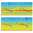 Analysis of duet vocalizations in Myiothlypis ...