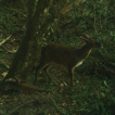 Mammals of Paso Centurión, an area with  ...